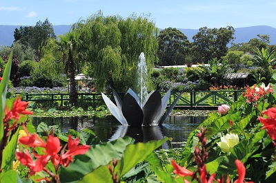 Blue Lotus Water Garden, Yarra Valley